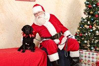 Susquehanna Service Dogs Holiday Party 2016