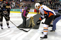 "Susquehanna Service Dogs SSD Gordon ""Drops the Puck"" at the Hershey's Bears Hockey Game 2018"