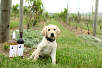 "Susquehanna Service Dogs ""Wine Event"" Vineyards of Hershey PA 2018"