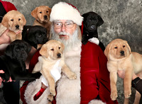 """Susquehanna Service Dogs"" ""Christmas Party 2014"""