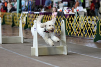 """Pawsabilities"" ""Flyball Dogs"" 03.09.2014"