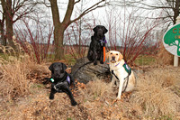 "SSD Boomerang, SSD Harlem, & SSD Eclipse Susquehanna Service Dogs ""The Boys""  Back  Together March 2"