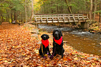 SSD Lovell and SSD Jersey Ricketts Glen State Park Fall 2016