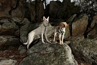 SSD Boomerang & Parker at Samuel S. Lewis State Park 2014